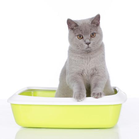 Chat assis dans la litière isolé