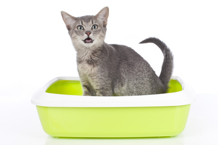 Cat sitting in litter box isolated photo