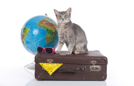 Cat on holidays isolated Imagens