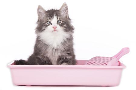 aseo: Gato que se sienta en la caja de arena aislado