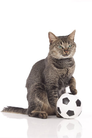 Cat with soccer ball isolated photo