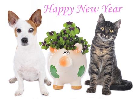 分離された幸運の豚の横にある犬と猫
