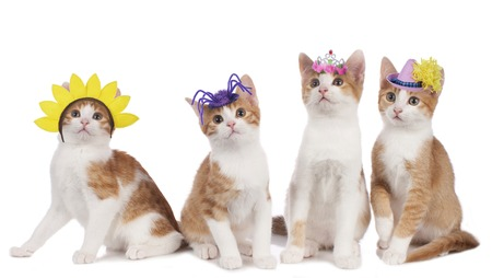 fasching: Four funny cats with carnival hats isolated