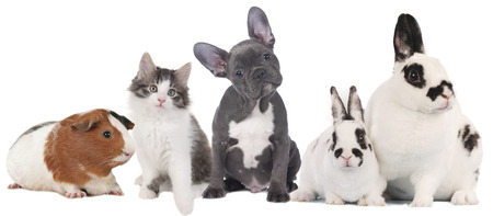 bunny rabbit: Group of different pets
