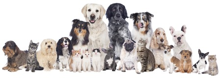 several: Big group of pets isolated