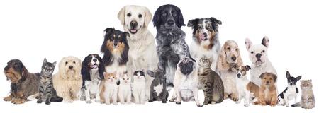 Grand groupe d'animaux de compagnie isolé Banque d'images - 35277453