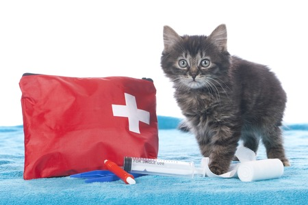 first aid kit: Cute kitten with first aid kit isolated