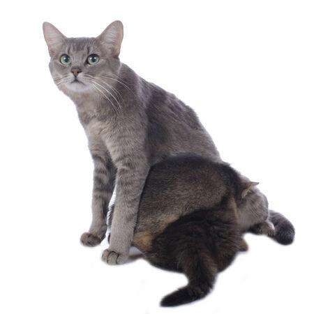 breastfeed: Mam� del gato con gatito Foto de archivo