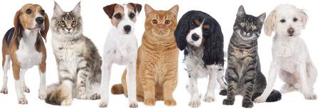 分離された犬や猫のグループ 写真素材