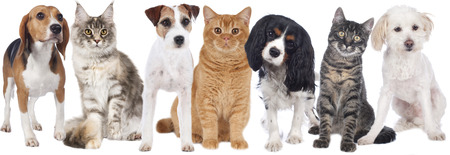 Group of cats and dogs isolated