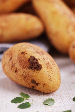 clod: Raw potatoes with dirty clod