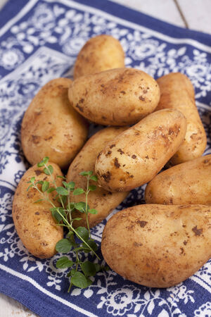 clod: Raw potatoes with dirty clod