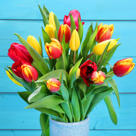 red and blue: bunch od red and yellow tulips with blue background Stock Photo