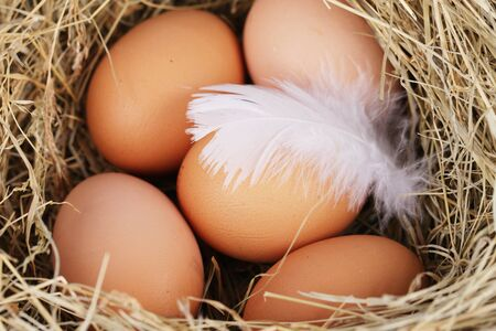 countrylife: natural nest with chicken eggs with straw Stock Photo