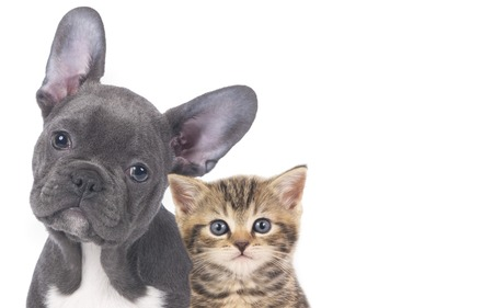 Cat and dog faces isolated