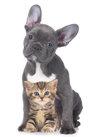 Kat en hond geïsoleerde Stockfoto - 38446969