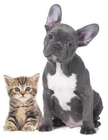 Kat en hond geïsoleerde Stockfoto - 38446987