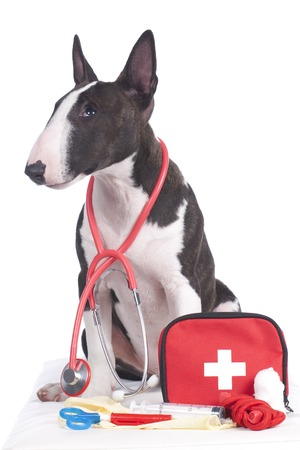 miniature dog: Cute dog with first aid kit isolated