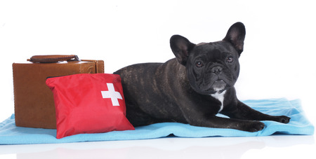 emergency case: Black french bulldog with emergency case and suitcase lying on a blanket Stock Photo