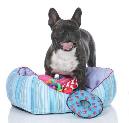 Bulldog francese con la base del cane e un sacco di giocattoli isolati Archivio Fotografico - 40917567