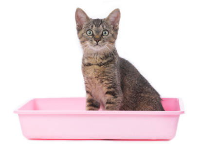 litter: Cat in litter box isolated