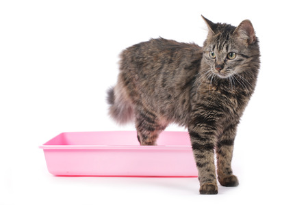 Cat in litter box isolated