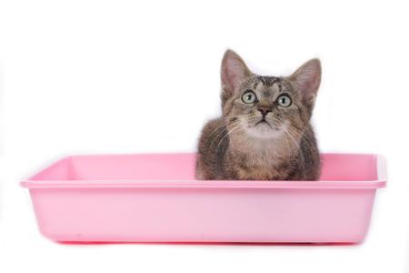 kitten with cat litter box