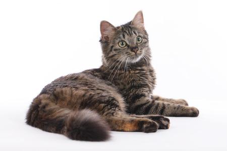 Mignon chat tigré couché sur fond blanc isolé Banque d'images