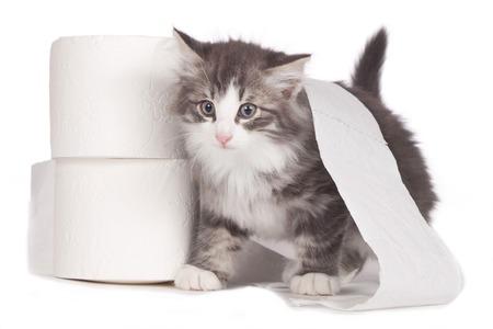 分離されたトイレット ペーパーのロールを持つかわいい子猫