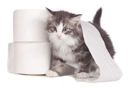 Cute kitten with toilet paper roll isolated