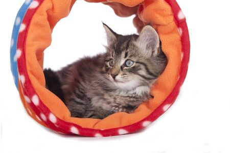 Cute kitten in a play  tunnel isolated