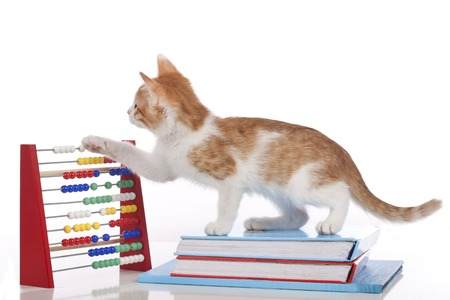 Cute kitten with calculator and books isolated