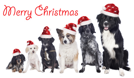 Group of dogs with Santa hats with merry christmas