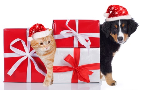 Cat and dog with christmas gift and santa hat