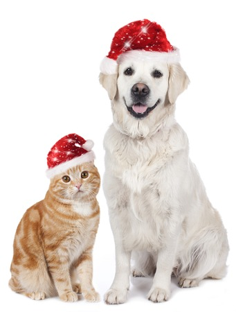 santa hat: Cat and dog with santa hat isolated on white