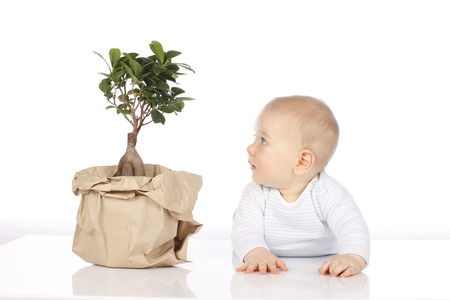 rompers: Cute baby looks at a  small tree isolated on white