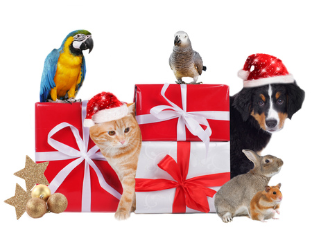 christmas costume: Different pets with christmas parcels isolated Stock Photo