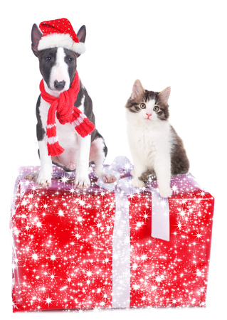christmas gift: Cat and dog on a christmas gift isolated
