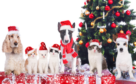 christmas hat: Group of cats and dogs on christmas
