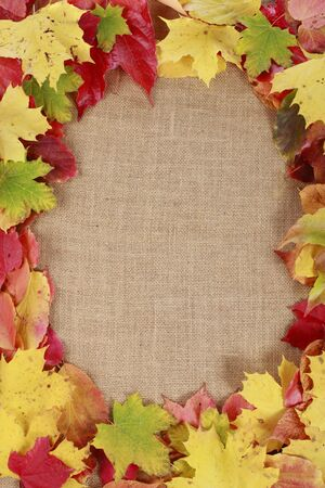 colorful frame: Colorful frame of autumn leaves Stock Photo