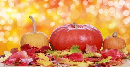 Autumn pumpkin with autumn leaves