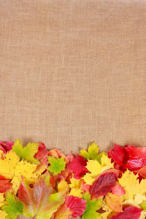high size: Brown  burlap with colorful autumn leaves Stock Photo