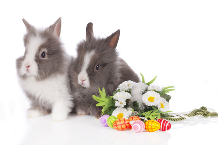 huevos de pascua: Cute dwarf rabbit with flowers and easter eggs