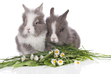 Two cute rabbits on white