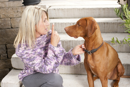 Attractive matured woman with her dog  magyar vizla outdoor
