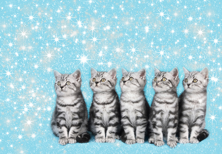 santaclause hat: five cute kitten in a row looking sidewaysCute christmas kitten with blue background and stars