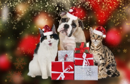 cat and dog with christmas decoration