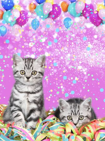 British shorthair cats with streamers and balloons
