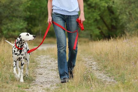 Maduro, mujer, paseos, perro, verano, verde, naturaleza, medio ambiente Foto de archivo - 82608862