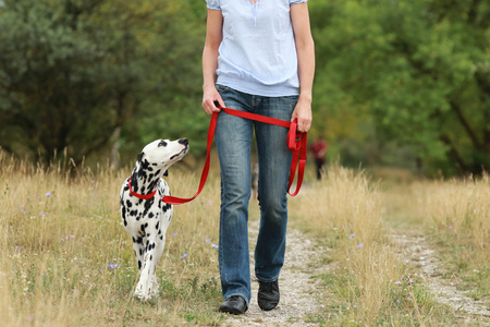Mature woman walks with a dog in summer in green nature environment